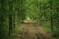 Forest path. A path in the forest in mid-summer Royalty Free Stock Photo