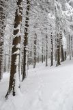 Forest path. Path in the woods covered with soft snow Royalty Free Stock Photos