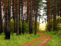 Forest path. Quiet autumn forest with path among the trees Stock Image