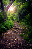 Forest Path. Leaf strewn path through the forest, with lens flare Stock Photos