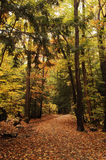 Forest path. A forest path during autumn season Royalty Free Stock Photography