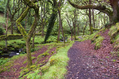Free Forest Path Stock Photos - 16165503