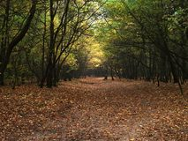 Forest path. In the fall Royalty Free Stock Image