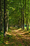 forest path Στοκ Εικόνες