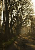 Forest path. Path in forest (wood), vanishing point Royalty Free Stock Photo