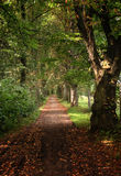 Forest path. At the begining of autumn stock images