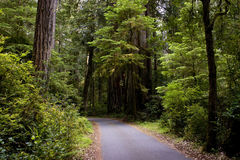 Forest Path Road Through Protected Land Area Stock Image