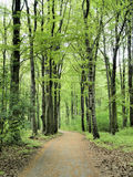 A forest path Royalty Free Stock Images