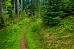 Forest path. Beautiful forest mountain tiny path Royalty Free Stock Images