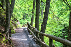 Forest Path Royalty Free Stock Image
