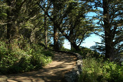 Forest path. Above Pacific ocean royalty free stock photo