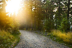 Forest path. Beautiful forest mountain path at sunset Stock Photo