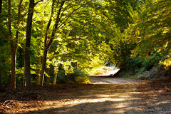 Forest path. A forest path in the mountain of Paggaio in Greece Stock Image