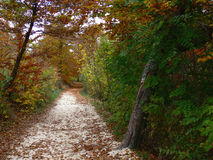 Forest Path. Walking path through woods in Budapest Royalty Free Stock Photography
