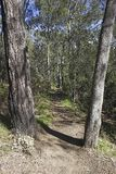 Forest Path Image stock