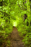 Forest path. Path in the green summer forest Royalty Free Stock Images
