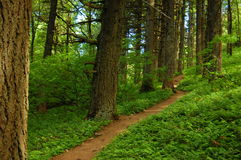Free Forest Path Royalty Free Stock Images - 2601749
