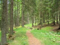 Forest path. Peaceful path in the mountain forest Stock Photography