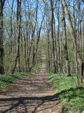 Forest path. Descending path in forest in spring Stock Image