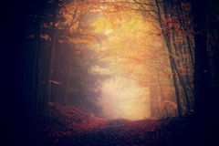 Forest path. Autumnal forest path, misty weather conditions Royalty Free Stock Photo