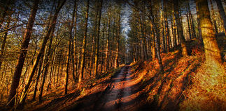 Forest path. Empty forest dirt path / trail through trees Royalty Free Stock Image