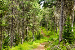 Forest Path imagens de stock royalty free