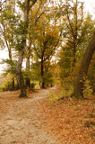 Forest path. A forest path during autumn season in Budapest mountain stock photos