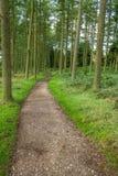 Forest Path fotografia stock