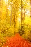 Forest path. Autumnal forest path in germany royalty free stock photography