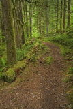 Forest Path. Mossy forest path in the neighborhood of Bryce Creek, Oregon Stock Photography