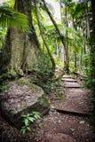 Forest Path Imagen de archivo