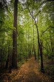 Forest Path 2 Royaltyfria Foton