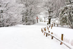 Forest path. Black pine forest under heavy snow at winter with a path and warning sign Royalty Free Stock Photo
