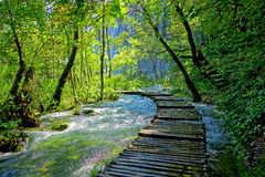 Free Forest Path Royalty Free Stock Photography - 44500557