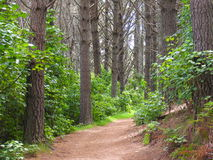 Forest Path. In New Zealand Royalty Free Stock Photography