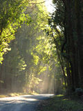 Forest Path. Sun rays falling on path in a forest Royalty Free Stock Image