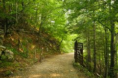 Forest path. In deep green forest Stock Photo