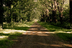 Forest path. A forest path in summer, England stock photos