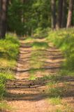 Forest path. Path in the forest stock image