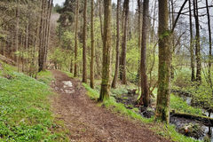 Forest path along creek in spring natural reserve Arba of czech tourist area Labske piskovce Stock Images