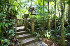 Forest Path with ancient stairs Stock Photography