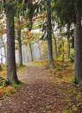 Forest path in autumn Stock Images