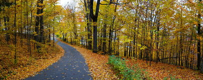 Forest path. Autumn forest with path, Canada Royalty Free Stock Images