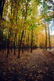Forest path in autumn with colored leaves. Nature Stock Image