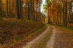Forest path in autumn colors in the Tricity Landscape Park, Gdan. Sk, Poland Stock Photography