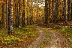 Forest path in autumn colors in the Tricity Landscape Park, Gdan. Sk, Poland Royalty Free Stock Images