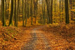 Forest path in autumn colors in the Tricity Landscape Park, Gdan. Sk, Poland Royalty Free Stock Photos