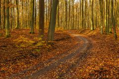 Forest path in autumn colors in the Tricity Landscape Park, Gdan. Sk, Poland Royalty Free Stock Photo