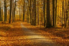 Forest path in autumn colors in the Tricity Landscape Park, Gdan. Sk, Poland Stock Image