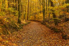 Forest path in autumn colors in the Tricity Landscape Park, Gdan. Sk, Poland Stock Photo